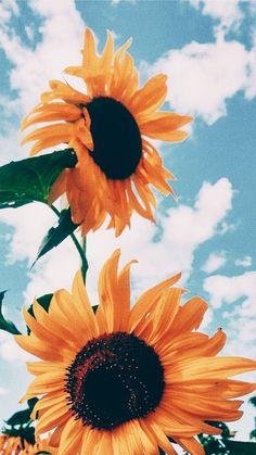 Sunflower wallpaper iphone x - greensalad Wallpaper Pastel, Sunflower Iphone Wallpaper, Iphone Wallpaper Vsco, Flower Phone Wallpaper, Iphone Background Wallpaper, Aesthetic Pastel Wallpaper, Nature Wallpaper, Aesthetic Wallpapers, Cloud Wallpaper