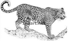 11x14 african leopard