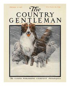 Herding Sheep, c.1916 Print by Charles Livingston Bull at Art.com