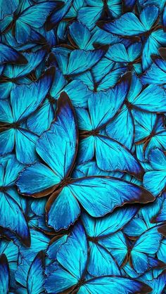 Wallpaper iPhone butterflies