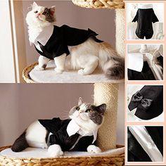 i'Pet® Handsome Prince Cat Bridegroom Wedding Tuxedo Faux... https://www.amazon.com/dp/B00TFEWS3E/ref=cm_sw_r_pi_dp_FIYGxb7WD8RTW   300 each