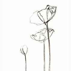 #blackandwhite #flowers #papavero #papaverorosso #poppy #poppymakesyoucrazy #draw #tattoo #minimalism #elegance
