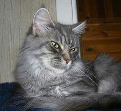 S * Acrobats Miss Meliss född 2004-09-25
