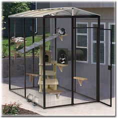Outdoor Safe Cat Run with Connector Tube Cats Rule Inspiration Of Diy Cat Enclosure Cat Run, Outside Cat Enclosure, Niche Chat, Cat Cages, Outdoor Cats, Outdoor Spaces, Indoor Outdoor, Cat Condo, Space Cat