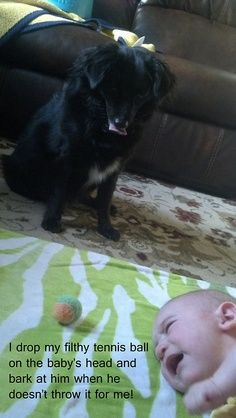 """I drop my filthy tennis ball on the baby's head and bark at him when he doesn't throw it for me."""