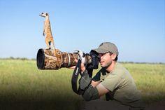 Meerkats Use Photographer As Makeshift Lookout Post