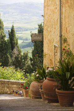 """Italy, Pienza, potted plants""...love the pots on the stairs...."