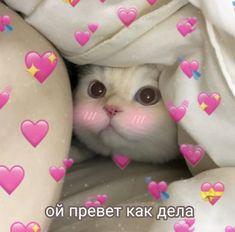 Cute Cats, It Hurts, Kitty, Love, Memes, Fun, Cute Kittens, Pretty Cats, Little Kitty