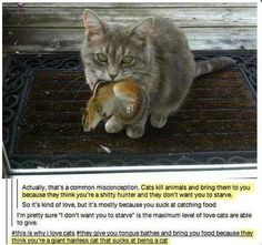 Cats bring you presents. | The 35 Cutest Facts Of All Time