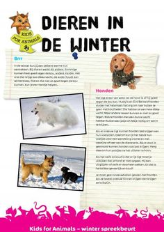 Dieren in de winter