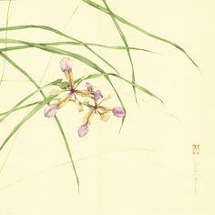 IRIS DA BACCA. acquerello su carta intelaiata, 30x30 cm, anno 2011