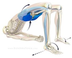 <strong>Active Setu Bandha</strong> - This image is from the <em>Anatomy for Backbends and Twists</em> in the <em>Yoga Mat Companion</em> book series.