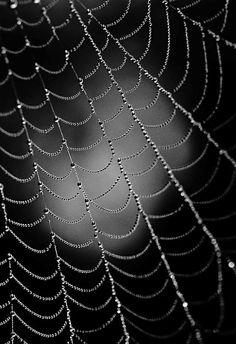 Nature Photography in Black and White - Practical Tips with Stunning Photographs - 121Clicks.com