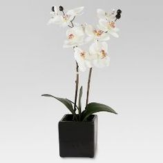 """21"""" Artificial White Orchid - Lloyd and Hannah"""