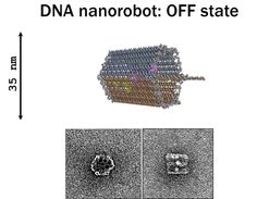 DNA nanorobots going into action
