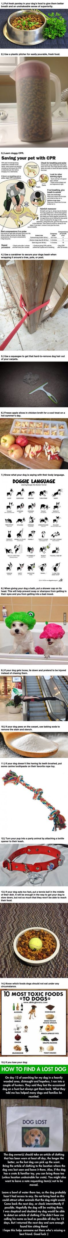 Great dog tips!