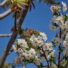 Beautiful spring #aksiine