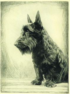 Dog Art Print 1935 Scottish Terrier Dog VINTAGE