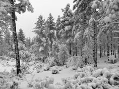 Arizona Snow Storm...