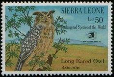 Long Earred Owl