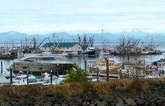 The harbor in Port Hardy, B.C. is crowded with boats. Look at the mega yacht.