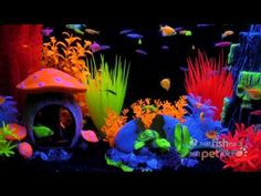 Glofish Aquarium Look At The Volcano Very Finding Nemo