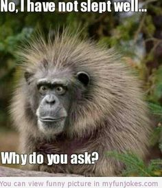 No I have not slept well humor pictures  - http://www.myfunjokes.com/other-funny/no-i-have-not-slept-well-humor-pictures/ #funny  #prank  #funnyimages  #animal  #dog  #haha  #cute