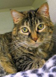 Adopt Minnie @ Feline Rescue, St.Paul, MN. She will be your best friend. Extra affectionate and happy to see people. She can't get enough love xoxo