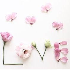 31 Ideas for wall paper iphone pastel valentines day Flower Words, Flower Quotes, Flower Art, Love Flowers, Beautiful Flowers, Valentines Day Wishes, Valentine Hearts, Mac Wallpaper, Cute Wallpapers