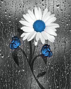 icu ~ Blue Daisy Flowers Butterflies, Raindrops, Blue Bathroom Decor, Blue Powder Room, Blue Gray Floral Wall Picture in 2019 Sunflower Wallpaper, Butterfly Wallpaper, Color Splash Photo, Blue Bathroom Decor, Sunflower Pictures, Splash Photography, Glitter Pictures, Blue Daisy, Blue Butterfly