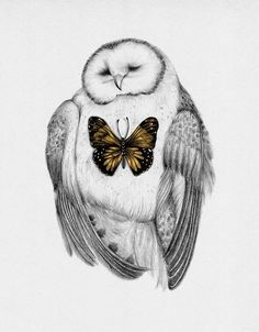 owl and butterfly by Peony Yip