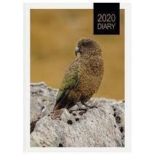 nz birds - Rapunga Google Birds, Google, Animals, Animales, Animaux, Bird, Animal, Animais