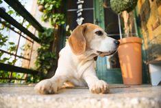 5 trucos para que el perro que pasa mucho tiempo solo en casa sea más feliz