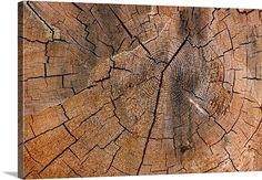 Tree Stump Detail