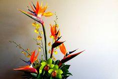 Birds of paradise by chriskompst, via Flickr