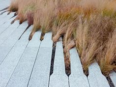 """Pavers at the High Line in NYC Pre-cast concrete pavers whose tapered ends organically diffuse into plant beds. The open joints between the pavers encourage growth, """"like wild grass through cracks in the sidewalk. Landscape Architecture, Landscape Design, Garden Design, Path Design, Mexican Feather Grass, Stipa, Concrete Pavers, Diy Concrete, Concrete Blocks"""