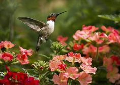 Sold a greeting card of Graceful Garden Jewel #hummingbird on www.rollosphotos.com thanks to a collector from Castle Creek, NY.