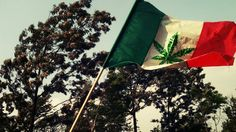 México aprueba el uso recreativo de la marihuana