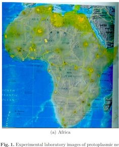 Adamatzkys Experiments Actually Took Place On Agar Plates - Slime mold map of us