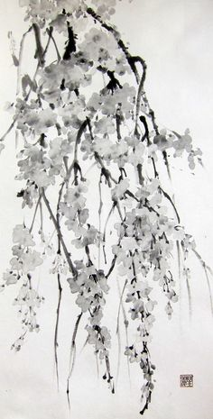 Sakura Cherry Blossoms Original Ink painting Japanese brush painting Suibokuga Sumi-e Black and White 13x25 inch