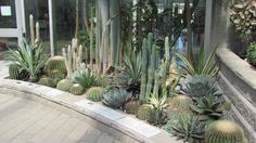 Cactus Garden My Future Home Pinterest Gardens
