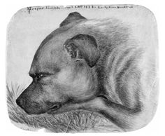 Emily Bronte's dog Keeper as drawn by Emily in 1838