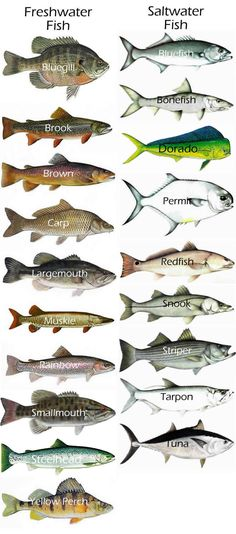 gamefish - Google Search Fresh & Saltwater More