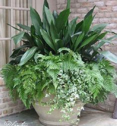 Gardening Autumn - A permanent pot planting: cast iron, autumn ferns, and variegated ivy. A Planters Design. - With the arrival of rains and falling temperatures autumn is a perfect opportunity to make new plantations Outdoor Planters, Garden Planters, Outdoor Gardens, Diy Planters, Outdoor Flower Pots, Outdoor Potted Plants, Evergreen Planters, Evergreen Container, Fern Planters