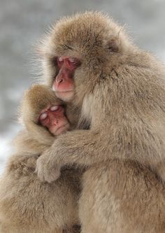 A MOTHER'S LOVE by Lee Fisher - Photo 17019509 - 500px