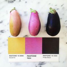 Shades of eggplant #pantoneposts #