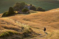 7 zile în Toscana – mai mult decât simplă o călătorie – The True Treasures Fields Of Gold, Toscana, Mai, Travel Photography, Country Roads, Italy, Summer, Instagram, Italia