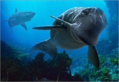 Odobenocetops in the Whale family. Walking With Dinosaurs, The Lost World, Prehistoric Creatures, Sea Monsters, Marine Life, South America, Mammals, Underwater, Whale