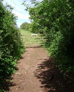 Uma trilha que leva a um campo cultivado, depois da porteira. Em Dawlish, condado de Devon, Inglaterra, Reino Unido.  Fotografia: Robin Stott.