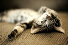 Like a graceful vase, a cat, even when motionless, seems to flow. - George F. Will